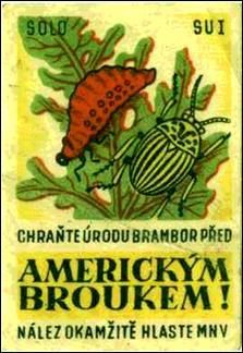 Zápalky z padesátých let — mandelinka bramborová- americký brouk